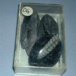 Orthoceras Marine fossil 04 good size x5 bundle